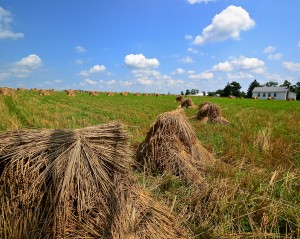 """""""Hayfield"""" By: Bethany Kenney"""